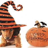 Pet Costumes!